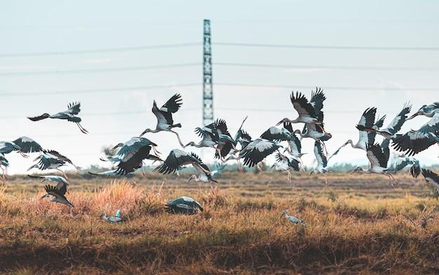 Vol d'oiseaux dans la nature