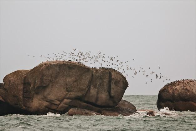 Vol d'oiseaux sur un rocher en mer
