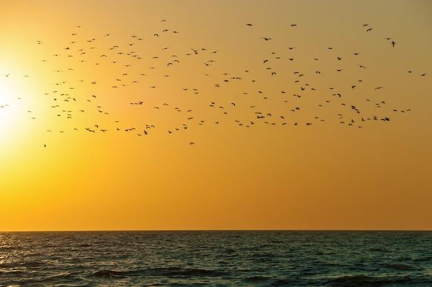 Une volée d'oiseaux au-dessus de l'eau sur fond de coucher de soleil. oiseaux au-dessus de l'eau.