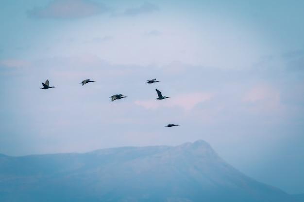 Volée d'oiseaux dans le ciel en afrique du sud