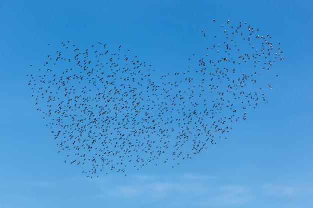 Une volée d'oiseaux dans le ciel clair. une volée d'oiseaux dans le ciel.