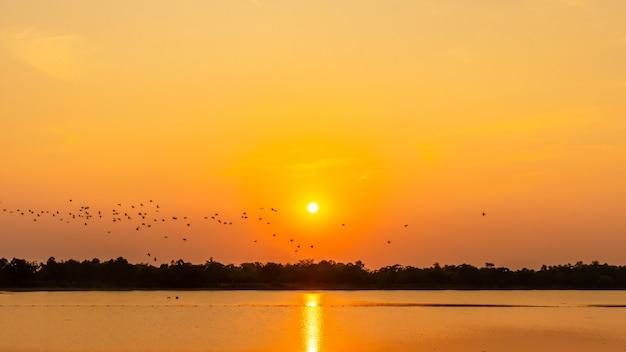 Volée d'oiseaux dans le réservoir, ombre du coucher du soleil, mouette