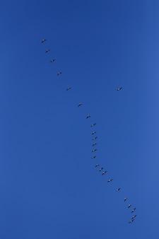 Volée d'oiseaux gris dans le ciel bleu