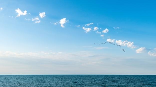 Une volée d'oiseaux migrateurs au-dessus de la mer