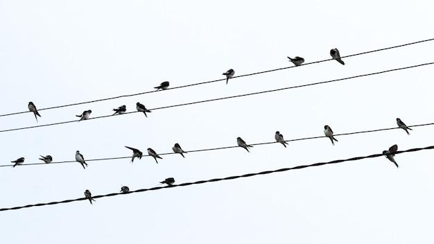 Une volée d'oiseaux se repose sur des fils électriques