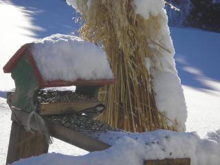 Volière d'hiver
