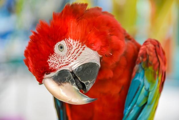 Volière de macaw à ailes vertes, assis sur l'arbre