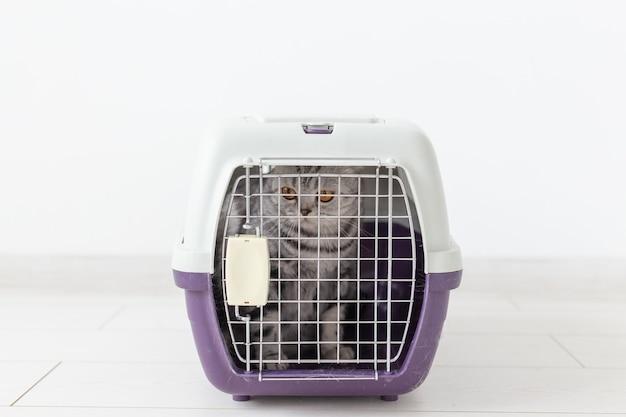 Voyage avec chat - chat gris scottish fold dans une boîte de transport