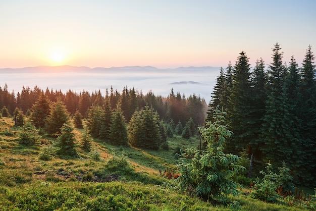 Voyage, trekking. paysage d'été - montagnes, herbe verte, arbres et ciel bleu.