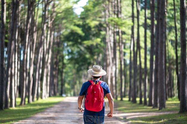 Un voyageur marchant dans la forêt de pins à suan son bor keaw, chiang mai, thaïlande