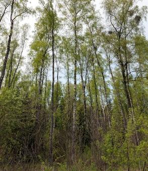 La vraie nature avec des arbres verts et de l'herbe éclairée par la lumière du soleil, un vrai repos et une distraction dans la nature
