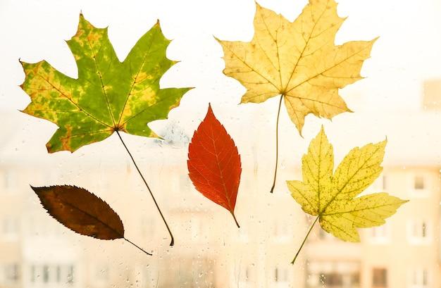 De vraies feuilles d'automne sur la fenêtre. photo de saison. couleurs jaunes et vertes avec texture. carte postale de novembre. arrière-plan transparent. belle vue sur la ville.