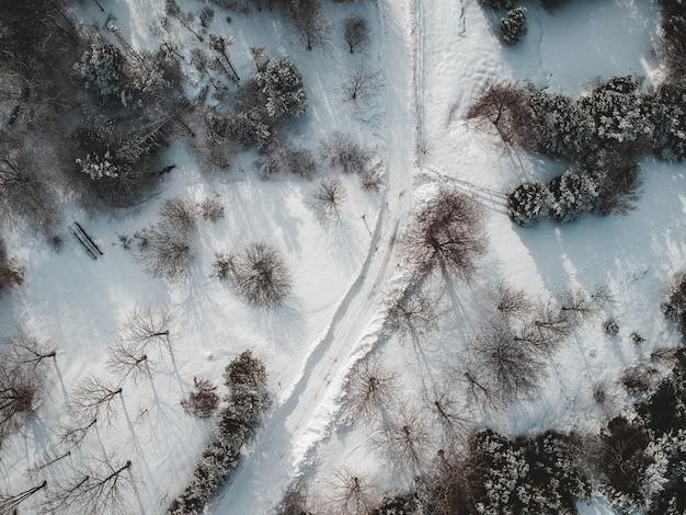 Vue aérienne d'arbres blancs et bruns près d'un plan d'eau pendant la journée