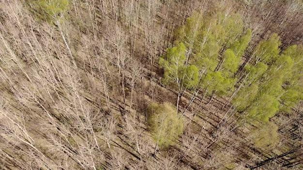 Vue aérienne d'arbres à feuilles caduques sans feuilles de feuillage dans le paysage au début du printemps. vue de dessus plat de haute attitude. contexte naturel des bois européens et de leurs ombres. vue de drone.