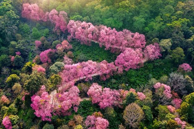 Vue aérienne des arbres de fleurs de cerisier rose sur les montagnes