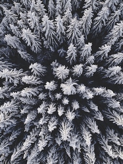 Vue aérienne d'un beau paysage d'hiver avec des sapins couverts de neige