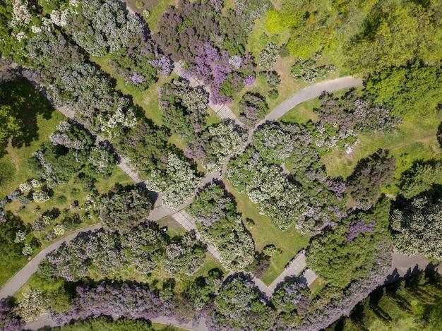Vue aérienne de beaux arbres en fleurs dans le jardin botanique et les routes en été, vue de dessus