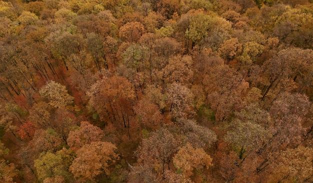 Vue aérienne de la belle forêt d'automne