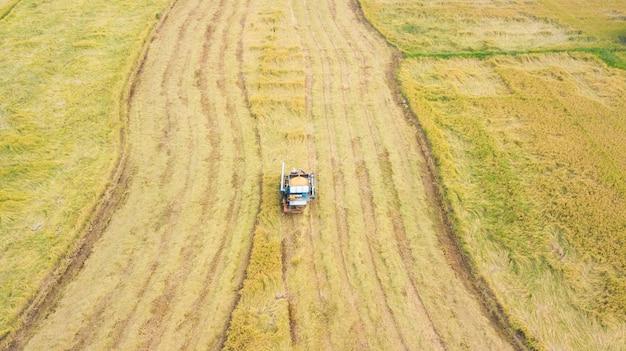 Vue aérienne, de, camion, récolte, riz, champ, thaïlande