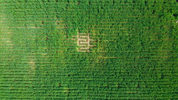 Vue aérienne de champ agricole