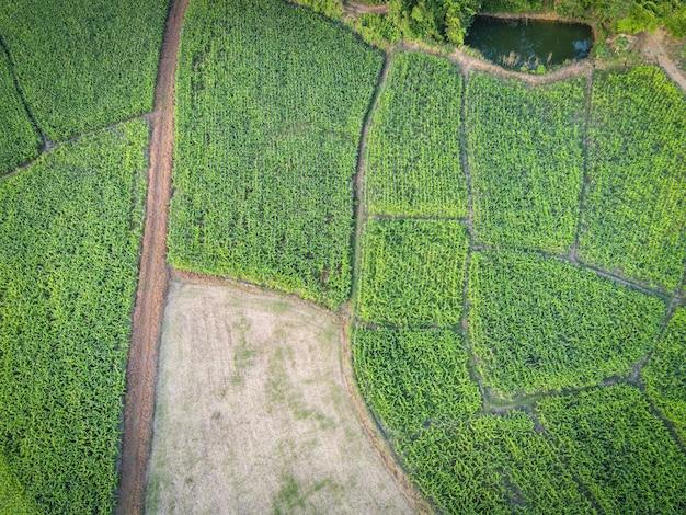 Vue aérienne champ environnement forêt nature ferme agricole fond champ de maïs d'en haut