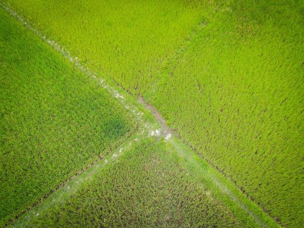 Vue aérienne champ environnement forêt nature ferme agricole fond rizière d'en haut
