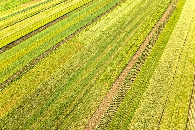 Vue aérienne des champs agricoles verts au printemps avec une végétation fraîche.