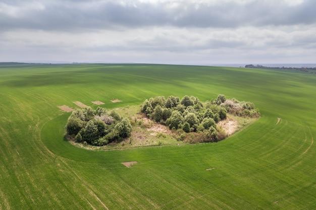 Vue aérienne des champs d'agriculture verte au printemps avec une végétation fraîche après la saison des semis.
