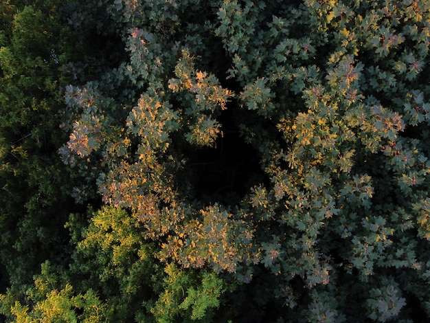 Vue aérienne des champs au coucher du soleil
