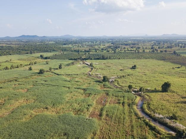 Vue aérienne des champs de canne à sucre qui poussent dans l'après-midi avec l'ombre des nuages et de la nature .. l'agriculture concept