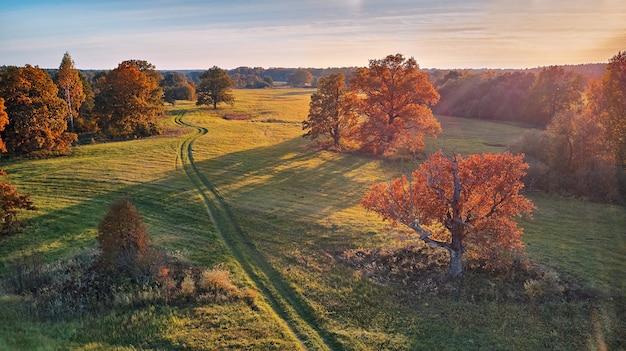 Vue aérienne des chênes en automne, ombre sur le pré. route de campagne sur les champs verts. panorama aérien ensoleillé, biélorussie. paysage avec des chênes-lièges. belles couleurs de la saison d'automne.