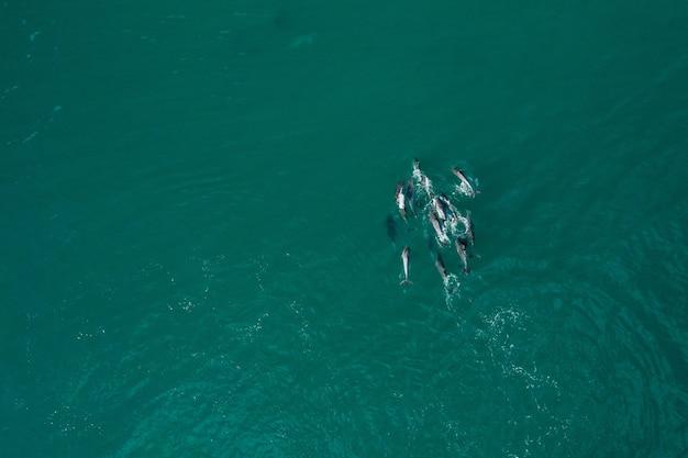 Vue aérienne de dauphins dans une mer turquoise pure pendant la journée
