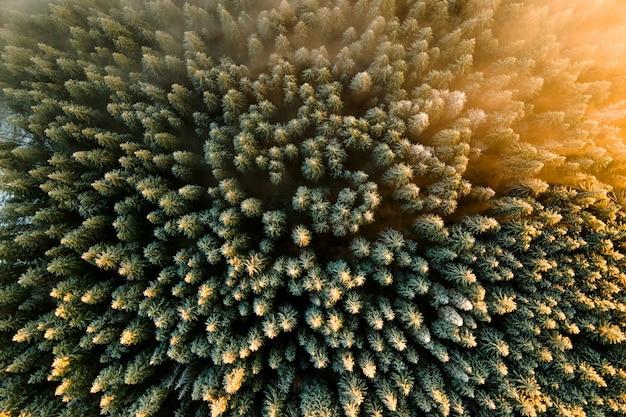 Vue aérienne de la dense forêt de pins verts avec des auvents d'épinettes dans les montagnes d'automne.