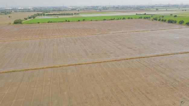 Vue aérienne, depuis, voler, drone, de, riz champ, à, paysage, vert, modèle, scène nature, vue dessus, champ, riz