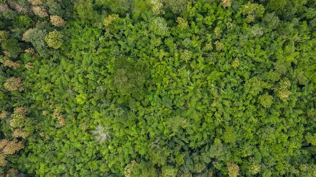 Vue aérienne de dessus de la texture d'arrière-plan de la forêt vue d'en haut