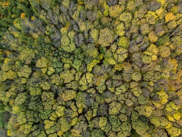 Vue aérienne d'un drone au-dessus de la plantation d'arbres sur une journée ensoleillée d'été.