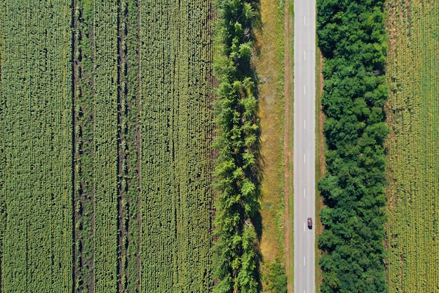 Vue aérienne de drone de champs de tournesol dépouillé divisé avec des bois et une autoroute