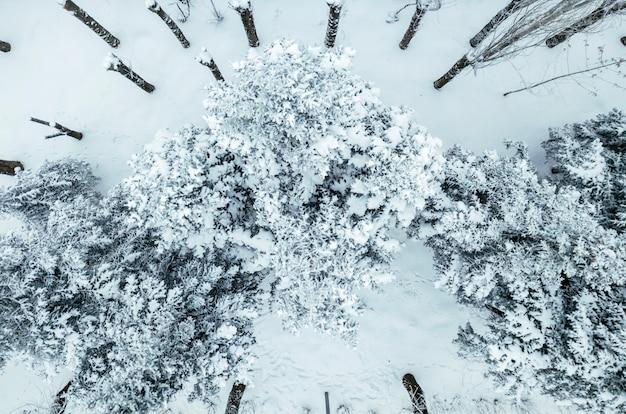Vue aérienne de drone de forêt de pins et de feuilles recouverte de neige dans une fraîche journée d'hiver b