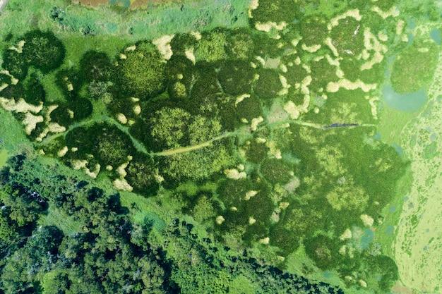 Vue aérienne d'un drone tiré de haut en bas de la forêt verte et du lac