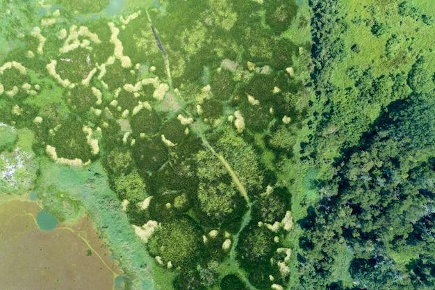 Vue aérienne d'un drone tourné de haut en bas de la forêt verte et du lac, magnifique paysage de nature sauvage