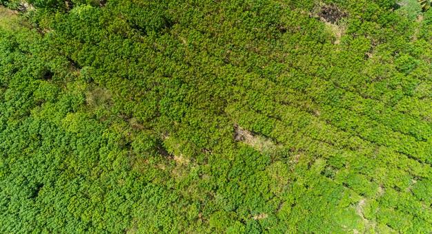 Vue aérienne drone volant tourné vue de dessus plantation d'hévéas.