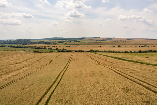 Vue aérienne du champ de blé de l'agriculture jaune prêt à être récolté à la fin de l'été.