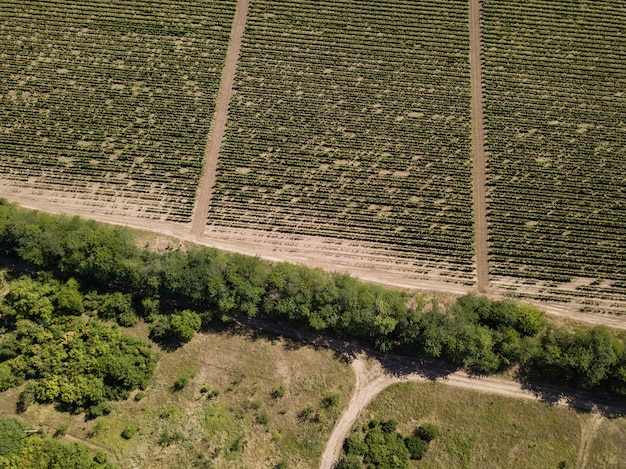 Vue aérienne du drone au vignoble