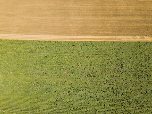 Vue aérienne du drone aux champs de tournesol et de blé