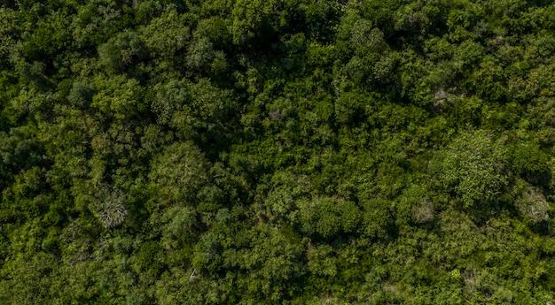 Vue aérienne du drone de la forêt tropicale en thaïlande, fond de nature