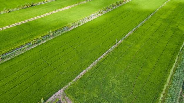 Vue aérienne du drone volant de riz sur le terrain avec fond de nature paysage vert