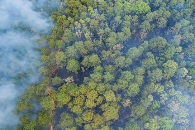 Vue aérienne du feu de forêt au printemps feu dans les arbres herbe sèche dans la forêt.