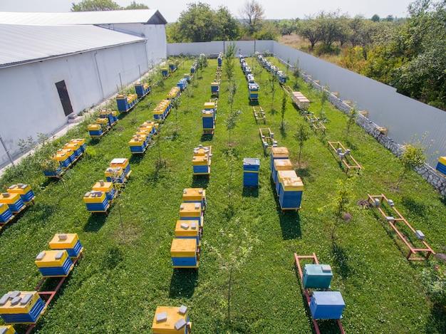 Vue aérienne du grand rucher d'apiculture industrielle