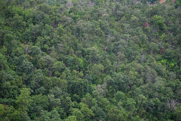 Vue aérienne du paysage d'arbres forestiers