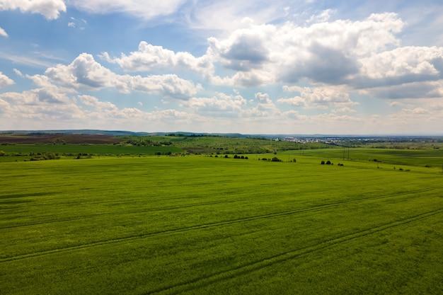 Vue aérienne du paysage de champs agricoles cultivés verts avec des cultures en pleine croissance par une belle journée d'été.